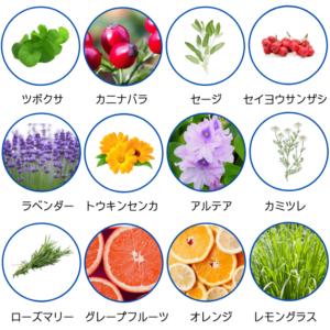 つぼくさ基礎水の植物成分