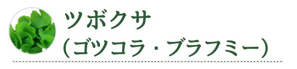 ツボクサ(ゴツコラ・ブラフミー)